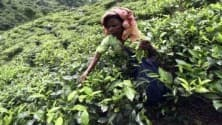 My TV : Eveready may look at PE investment to scale up packet tea biz
