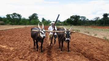 In position to take advantage of early sowing; see subsidy payments soon: Zuari Agro